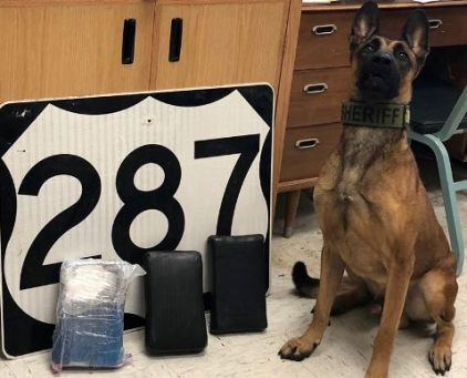 Drug Dog Alik cocaine bust