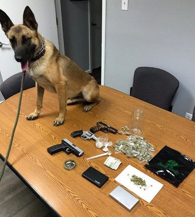 Police Dog Kolt drug bust