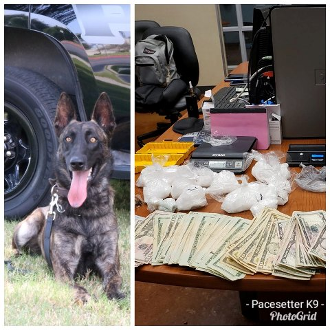 Police Dog Warrant bust