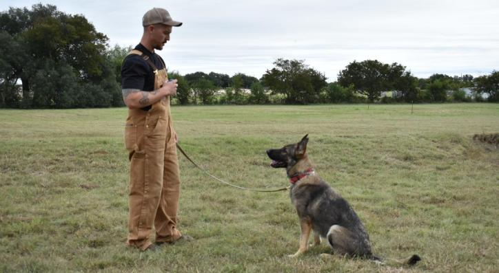 police dog obedience training