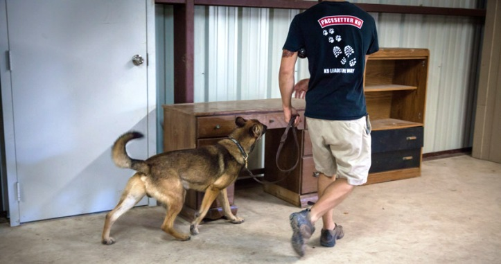 narcotics and explosives detection
